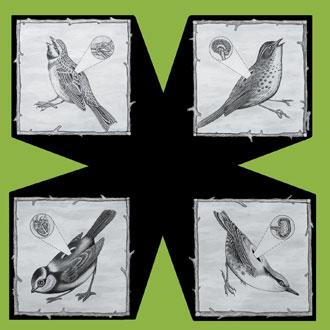 Birds: 2008